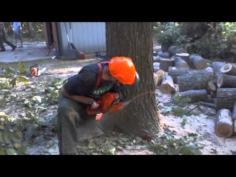 Deaf Lumberjack