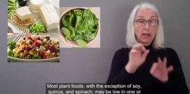 Plant-Based Protein Diet
